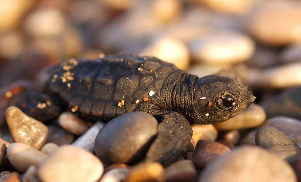 İklim değişikliği Akdeniz'deki canlı türlerini tehdit ediyor
