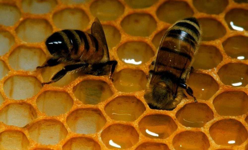 Pandemi Döneminde Popülaritesi Artan Arı Ürünleri 18 Kasım'da Konuşulacak!