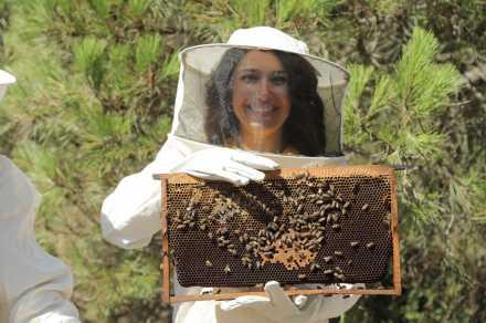 Bal ve arı ürünlerinde doğru bilinen yanlışlara savaş açıldı....